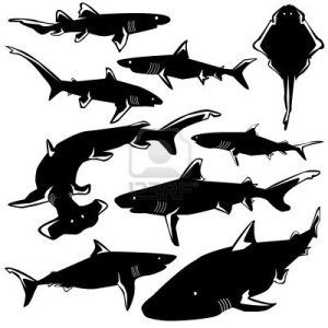 4833404-dangerous-sharks-in-vector-silhouette-with-stylized-illustration